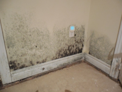 mold is typically found in kitchens bathrooms basements and attics
