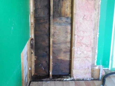 Black mold growth behind drywall