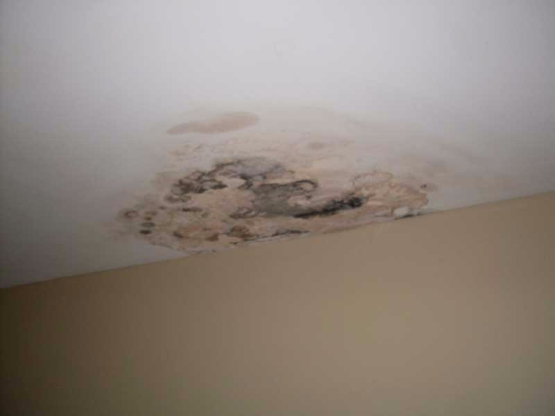 bathroom mold - Mold Bathroom Ceiling
